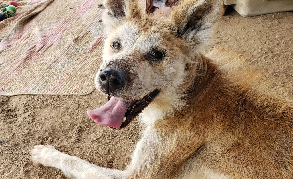 Those who are the happiest, never did have everything. Meet Eloise #AkitaRanch 28930 Ellis Ave, Romoland, CA Email apassionforpaws@gmail.com #adoptdontshop #rescuedog <br>http://pic.twitter.com/SKUAZjPxCN