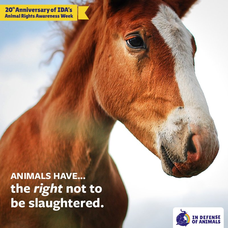 And yet they are because we don't see them the same way as we see humans, nor grant them the same rights to life, liberty, and the pursuit of happiness.  #horses #animals #animalrights
