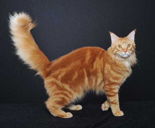 Nama Kucing Huruf M 81021 Nama Untuk Kucing Comel Lucu Dan Unik