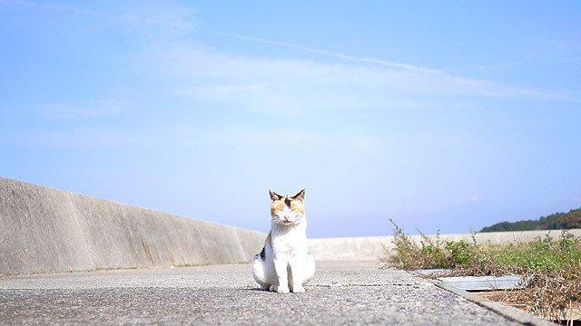 岡山県の真鍋島。こちらも猫だらけの島です(安藤)。 / 猫がカップルよりも多い島に行く  #DPZ