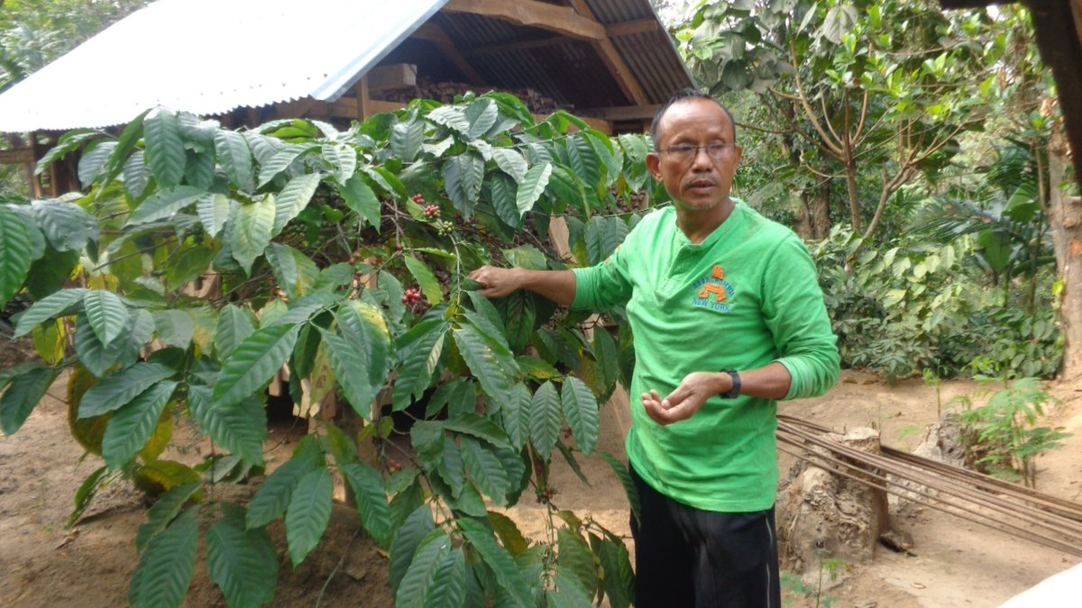From being a primary school teacher to becoming a successful organic farmer, Wefstar D Shira from West Garo Hills, #Meghalaya became the first person to start coffee plantation in this part of the state. Read his success story here:  http://mbda.gov.in/case-wefstar-d-shira-and-his-integrated-organic-farm… #MBDA #SuccessStories