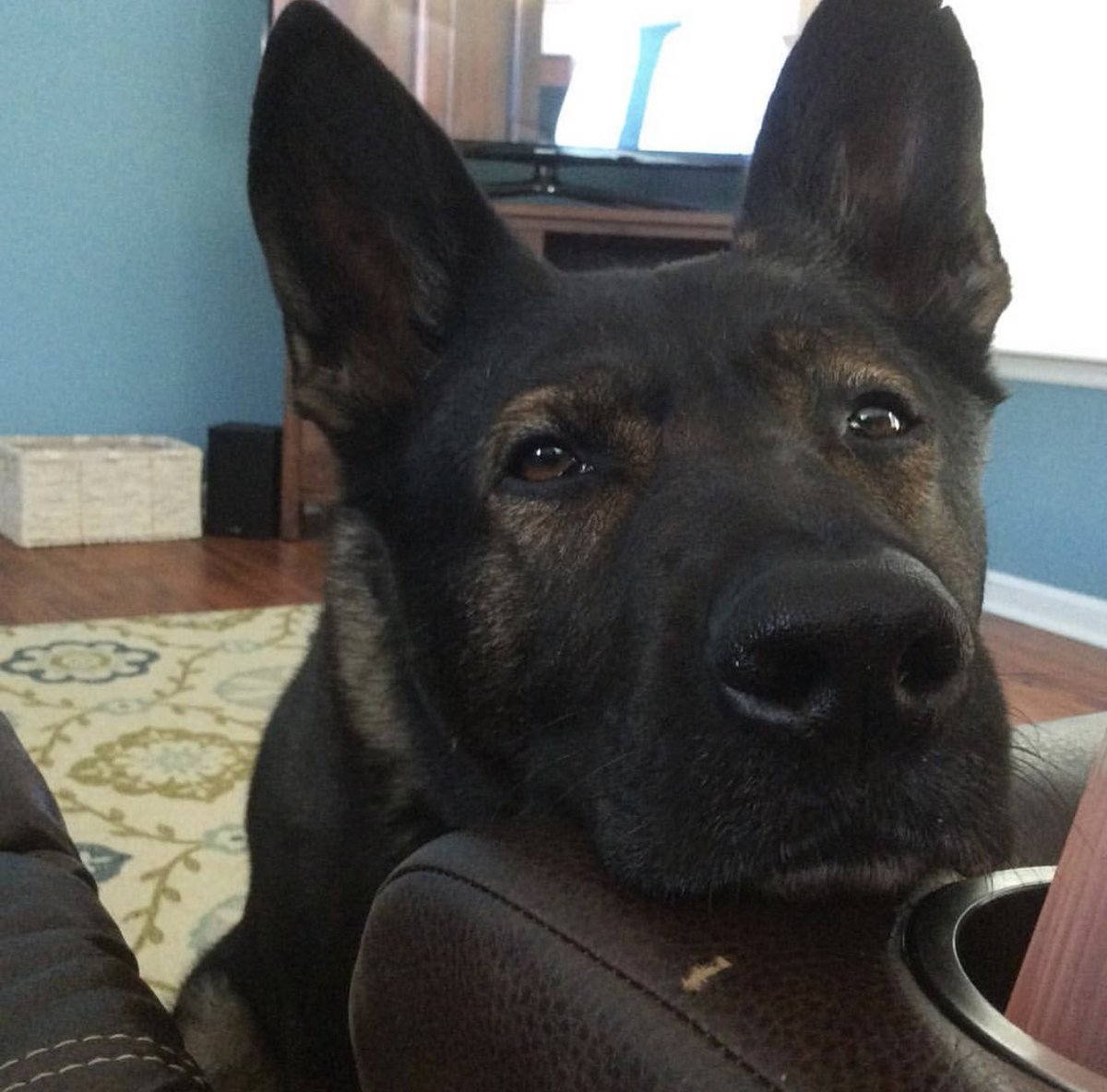 Depending on who I'm talking to.. Goodnight or good morning!   I'm off to bed but here's K9 Cam to keep you company.   #bluepawsmatter #k9 #copdog #livepd #policedog #livepdnation #livepdfamily #gsd #backthebark<br>http://pic.twitter.com/bC6DUtr9e0