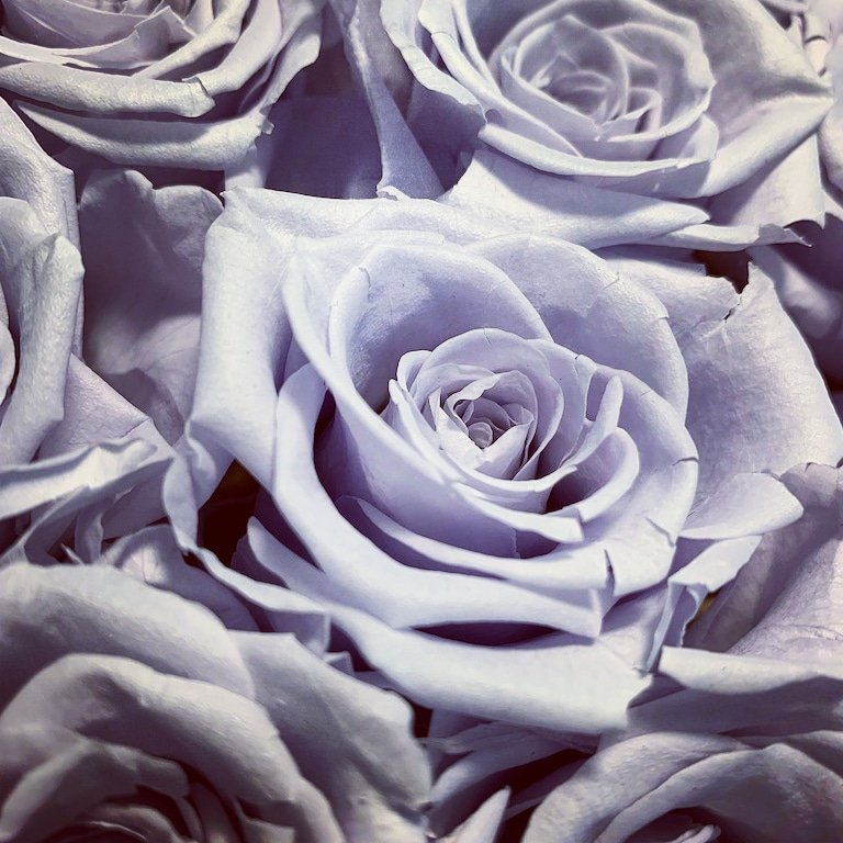 delicate shades preserved with care @RoseForeverNY #roses #light #Blue #purplesummer #giftideas https://t.co/mRyddudrJL