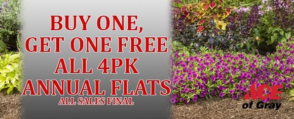 Buy One, Get One FREE on all 4pk Annual Flats! Stop by today and get gardening with Ace of Gray!  #ShopAceofGray #BOGO #AnnualFlats #AllSalesFinal #AceNursery #GreatDeals #TheresNoStoreLikeIt