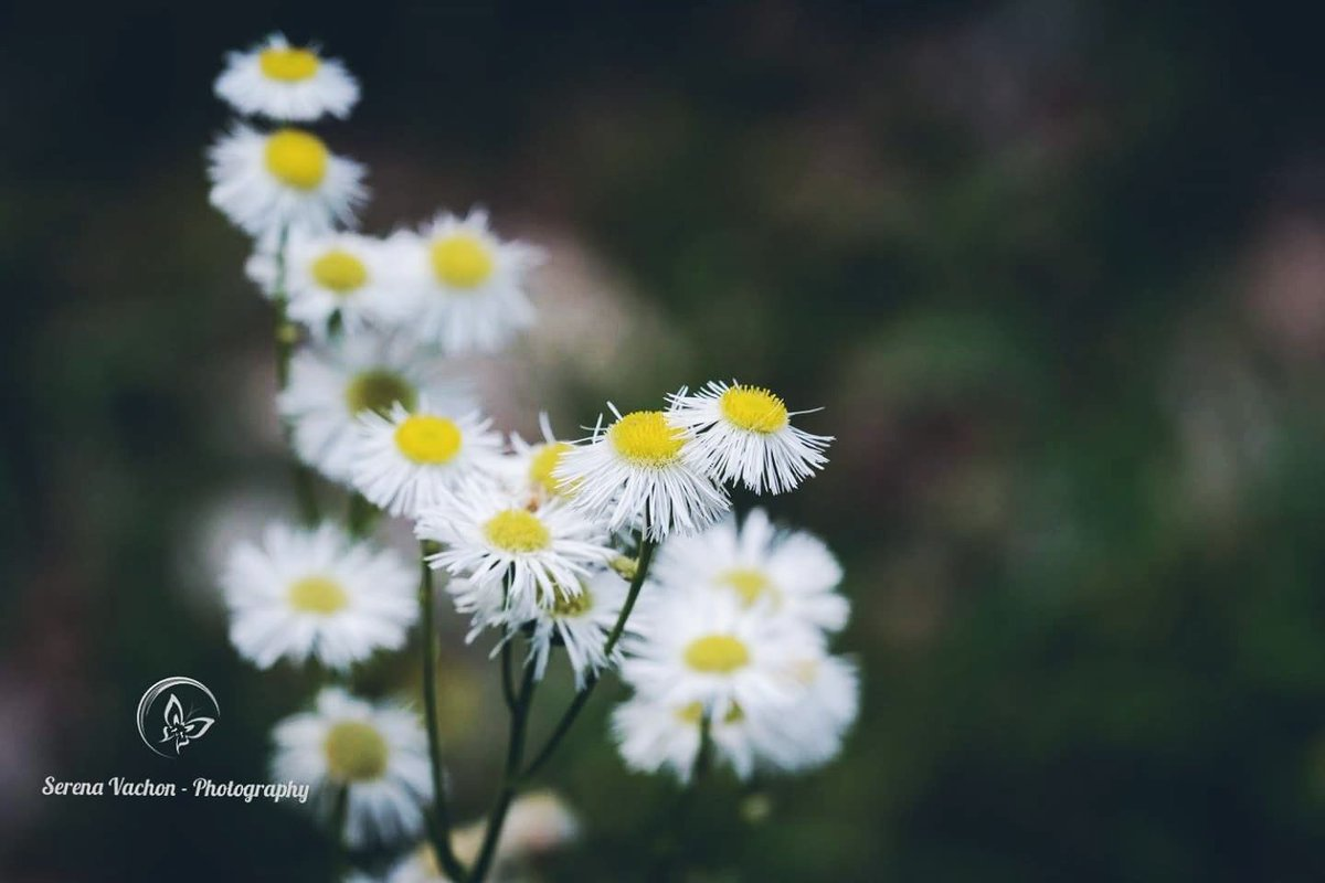 Have a wonderful Thursday! #wildflowers #nature #photography https://t.co/t7VSU3spgn