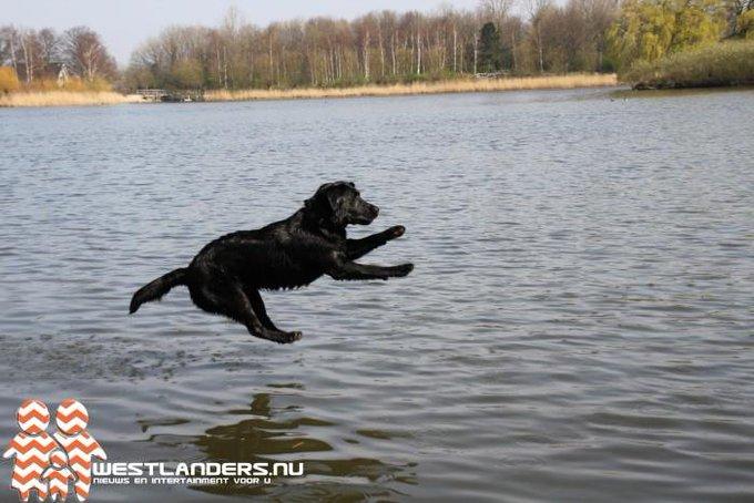 Geen aanlijnplicht voor honden in het Prinsenbos https://t.co/KhJiyitqAO https://t.co/uNvVrRDOP0