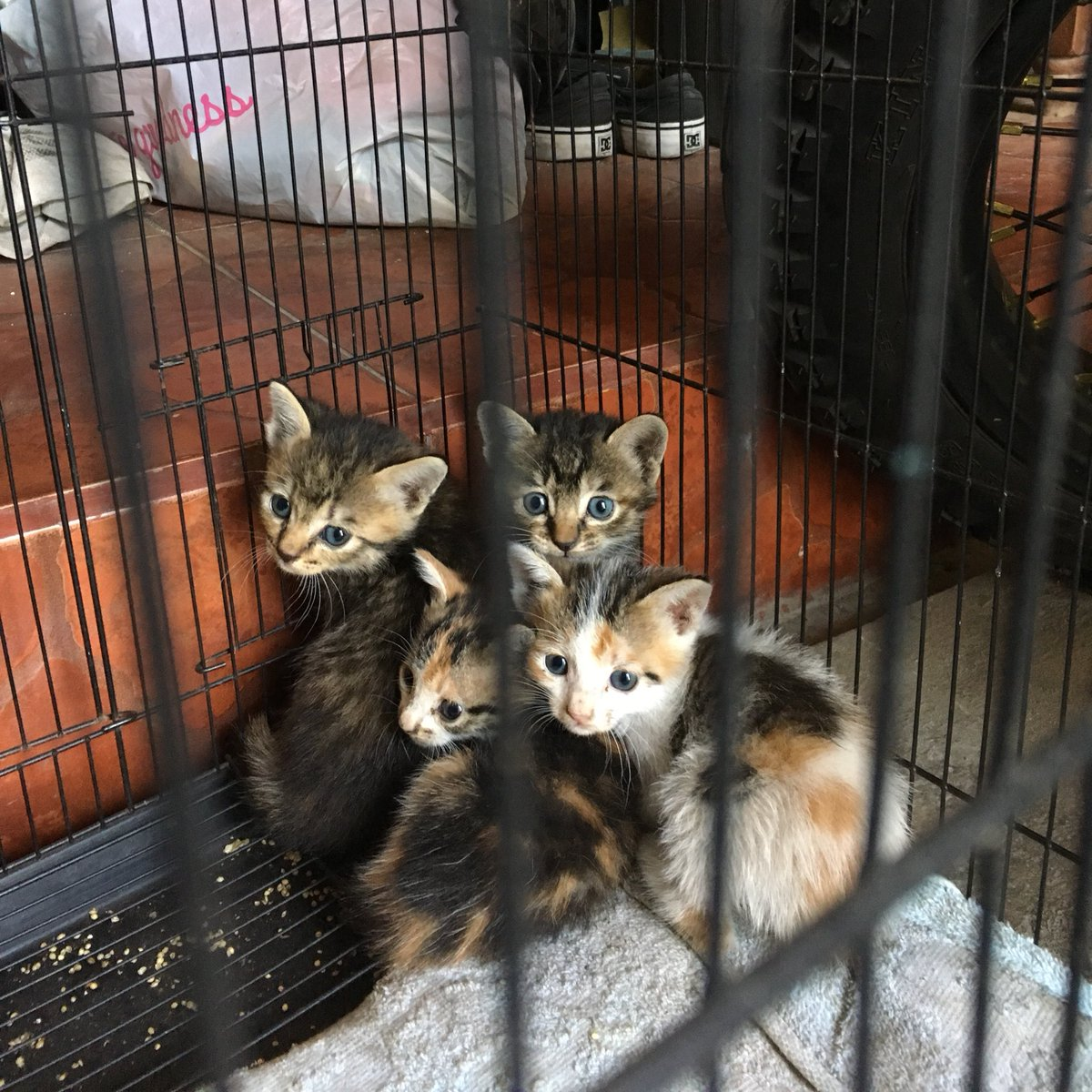 Cucul On Twitter Kalau Kucing Kalian Ada Tanda Huruf M Di Dahi Bisa Disebut Tabby Semua Kucing Tabby Pasti Begitu