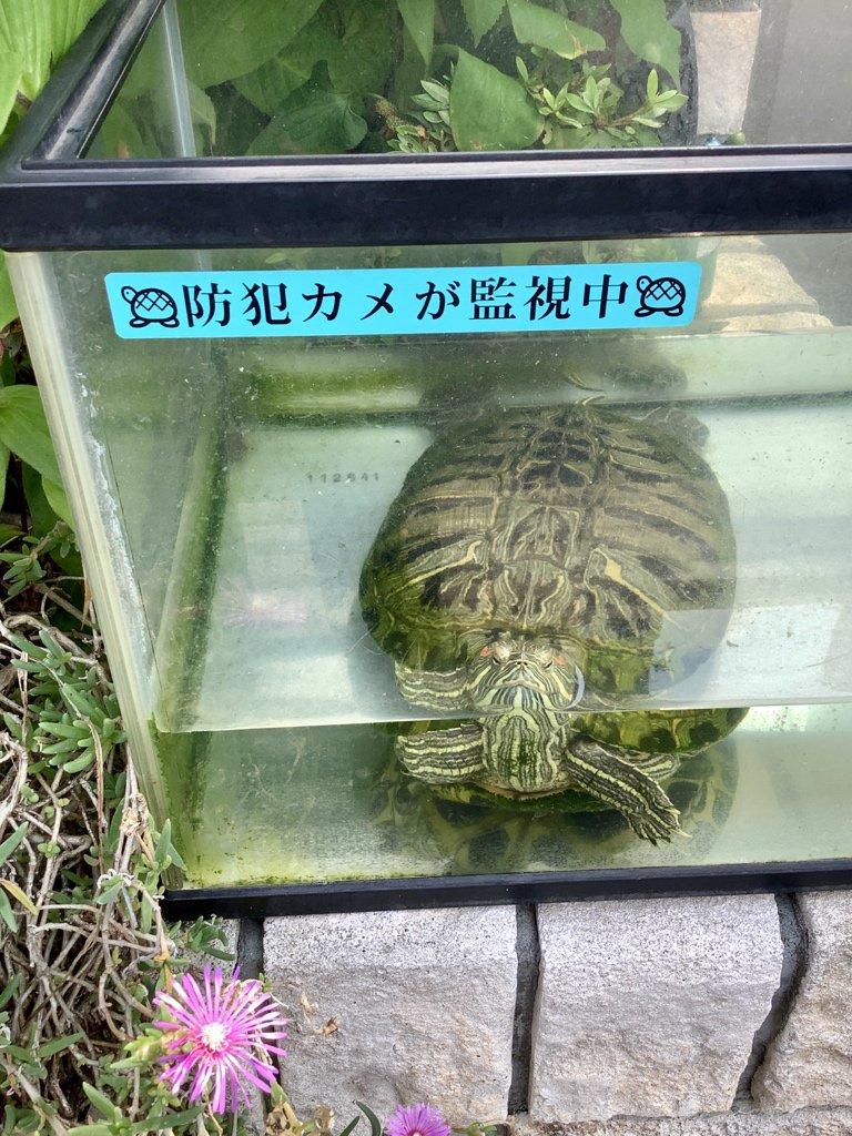 関島岳郎さんの投稿画像