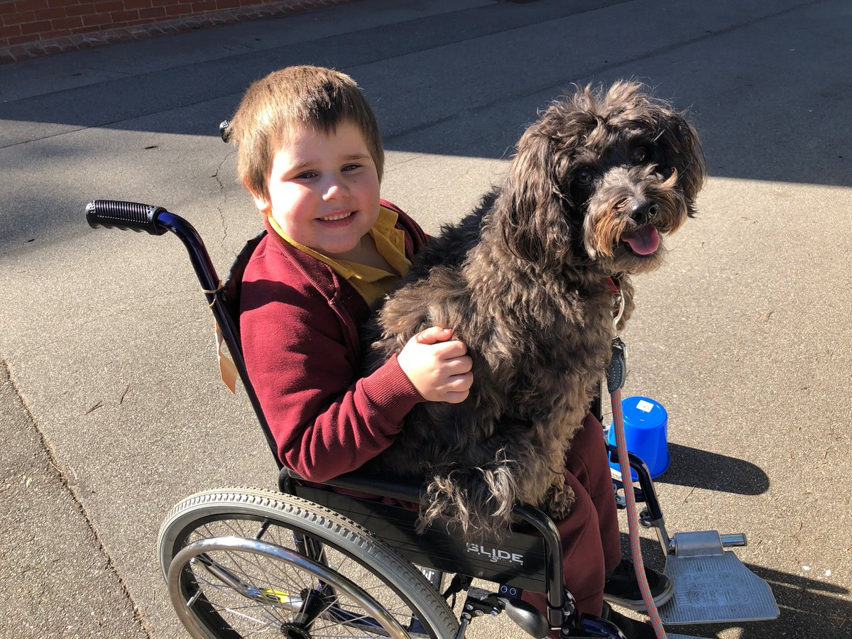 PAW-SITIVE SCHOOLING!   Osborne PS students have got a furry classmate in Esky the companion/ therapy dog!  The impact that he has in helping students who may experience difficulties is remarkable and we think he deserves a treat!   #TakeYourDogToWorkDay #FurryFriday #schnoodle<br>http://pic.twitter.com/9waIb9CDto