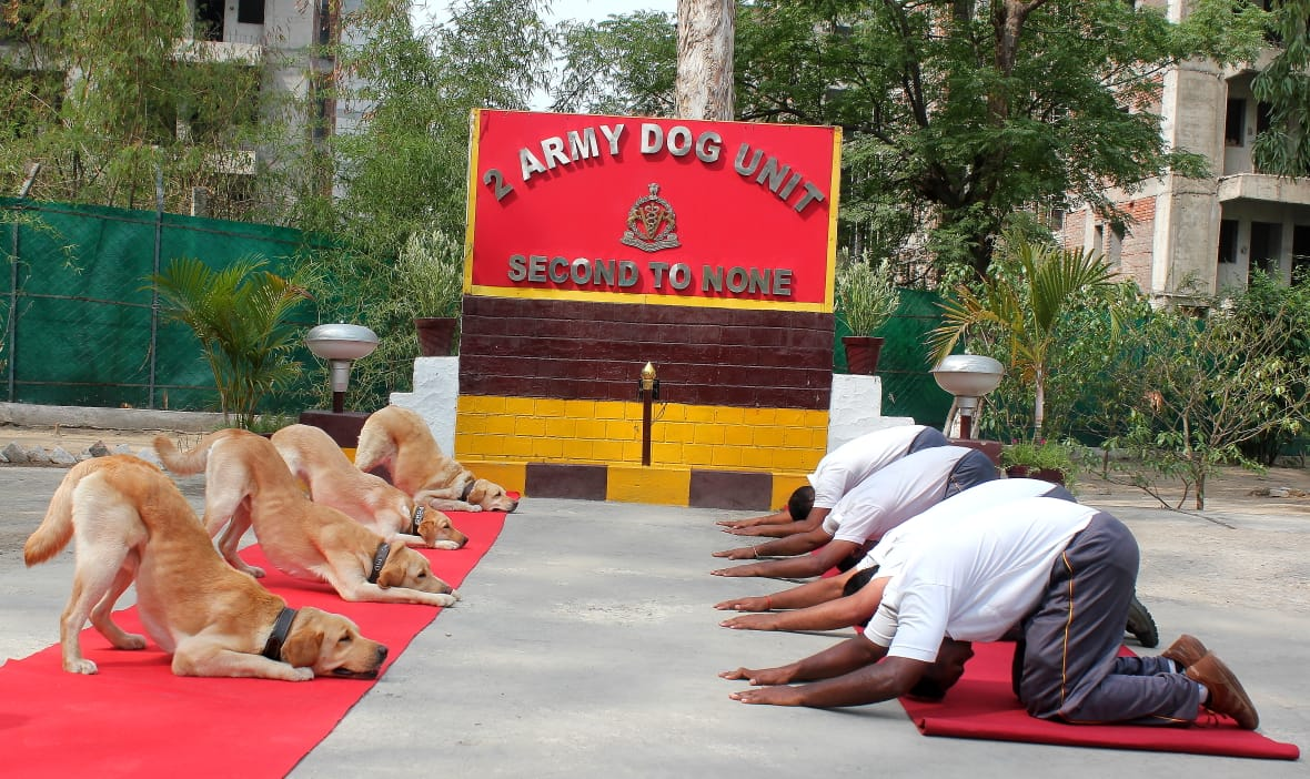 "#DYK that there is a yoga for dogs, known as 'Doga'?   As the world celebrates the Fifth #InternationalDayofYoga - ""man's best friend""  are also not far behind when it comes to practicing asanas. These paw-sitive  photos are all the #FridayMotivation you need!   Via @ANI<br>http://pic.twitter.com/zbG2q3zoUo"