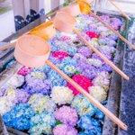 【福岡県 春日神社】のとってもキレイな手水舎の紫陽花!