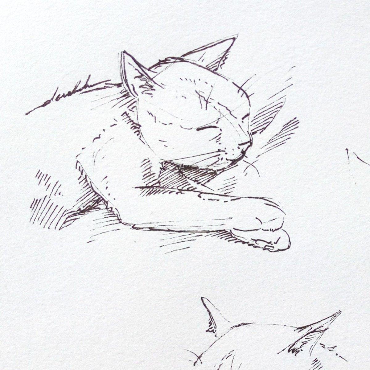 Sleepy Merlin #dailyart #dailyillustration #sleepy #sleepyhead #sleeping #cat #cats #pets https://t.co/axf2RgZbYL