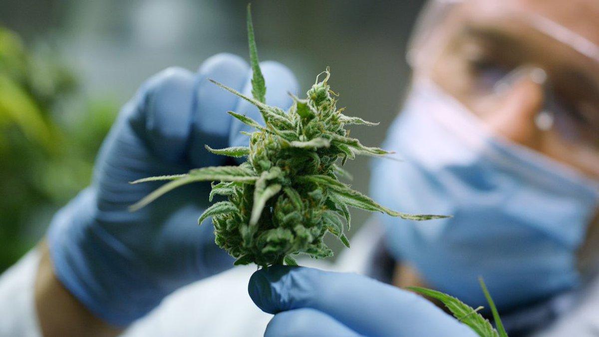 """Les défis du #cannabis aux Etats-Unis et au Canada. Pour @jchatterleyCNN, présentatrice de l'émission @firstmove sur @cnni, """"le potentiel d'investissement est clair"""".  Retrouvez sa chronique pour @CercleLesEchos : http://bit.ly/2ZLwAsX #CannabisBusiness"""