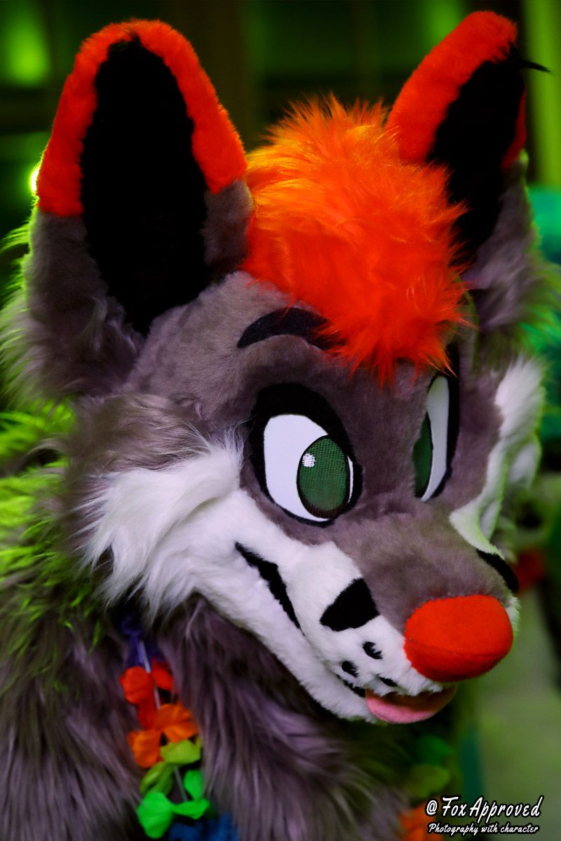 Yip yap!!!  I heard it was Friday!  Which means a news feed full of fluff!  So, have a fuzzy fox!    :  @FoxApproved  :  @LLMCostumes   #FursuitFriday #Fursuit #furryfandom #FurryFriday <br>http://pic.twitter.com/N8MpZdPKWn
