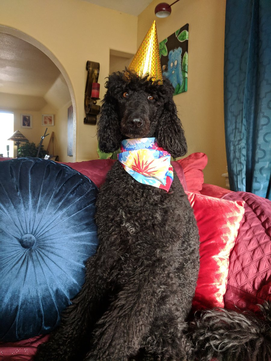 Today is my birthday, I'm 4!    Can I get a woot woot? Party time peeps! #birthday #dogsoftwitter <br>http://pic.twitter.com/k9U3596vcR