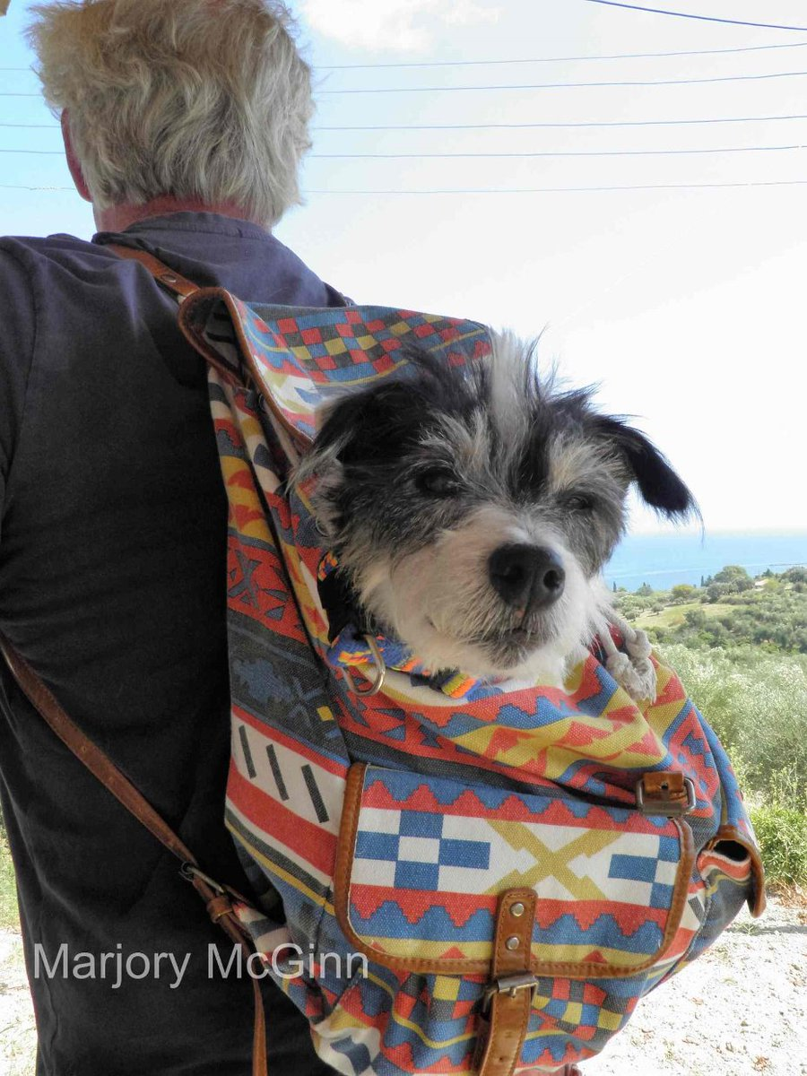 A pic of #Wallace for you @JillsBookCafe since we both love the #JackRussellTerrier. And have a laff cause you might remember from #ThingsCanOnlyGetFeta book  we smuggled Wallace into a big archaeological site in a backpack. This wasn't it, was bigger but you get the idea. Ho, ho<br>http://pic.twitter.com/T2nxnkr4Sd