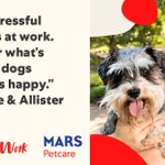 Image for the Tweet beginning: Why do #PetsWorkAtWork? They're good
