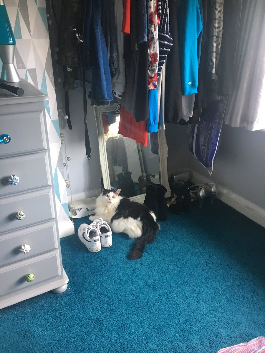 Hi furrends, today I thought I was a fluffy pair of shoes, so sat very neatly in line with the other ones  #LarryFanClub #Cats #FIV #FridayFeeling <br>http://pic.twitter.com/qrXxPfhVjc