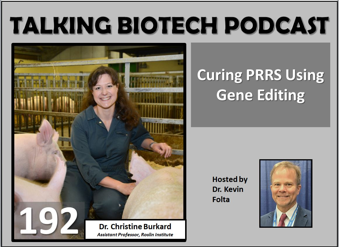 Porcine Respiratory and Reproductive Syndrome is caused by a virus, leading to pig health issues and economic loss. Dr. Christine Burkard at the @roslininstitute has a gene-editing-based solution. @NationalPork @GBpork #pork