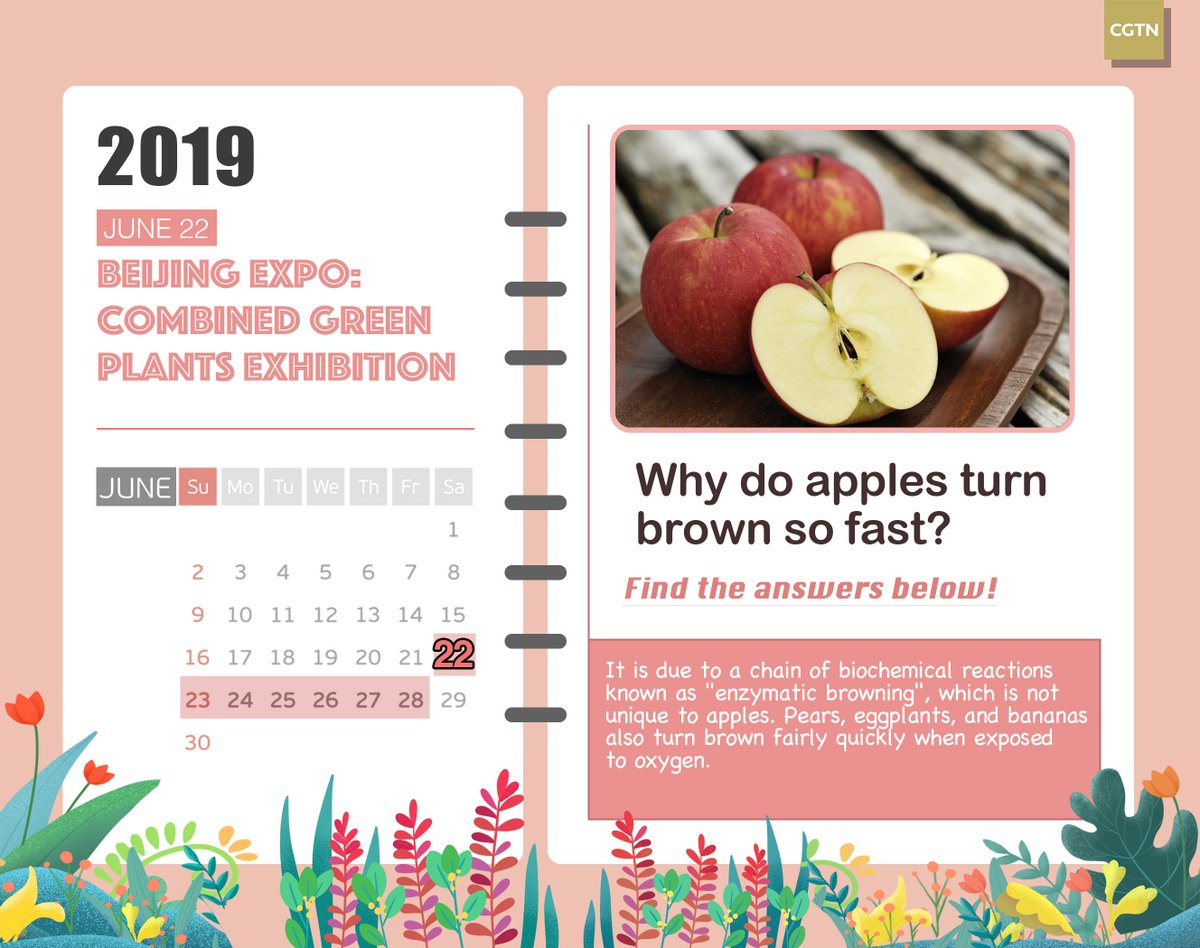 #BeijingExpo: Have you been curious as to why apple slices turn brown after being cut? Find the answer in this week's Plants Calendar for #HorticulturalExpo!