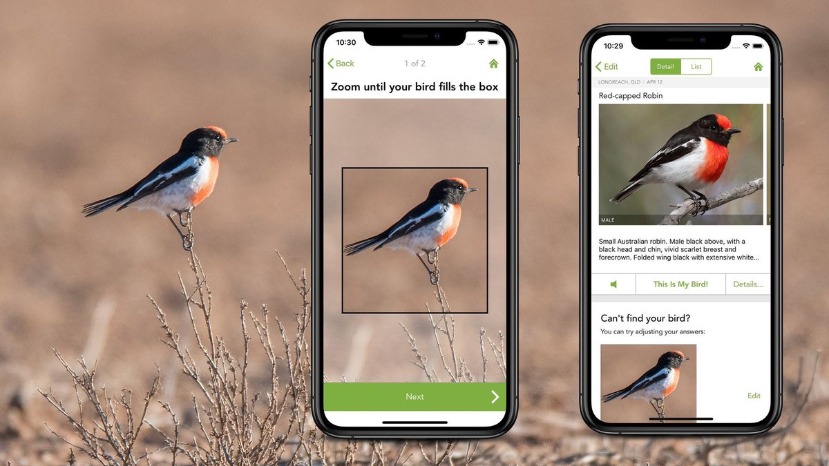 Merlin Bird ID comes to Oz 🇦🇺! Check out the free bird packs for 450 species in north and southeast #Australia! Whether you live in or travel to Australia, use Merlin as your #birdidentification guide, with helpful ID tips, photos, and audio, all in your pocket. And Photo ID!