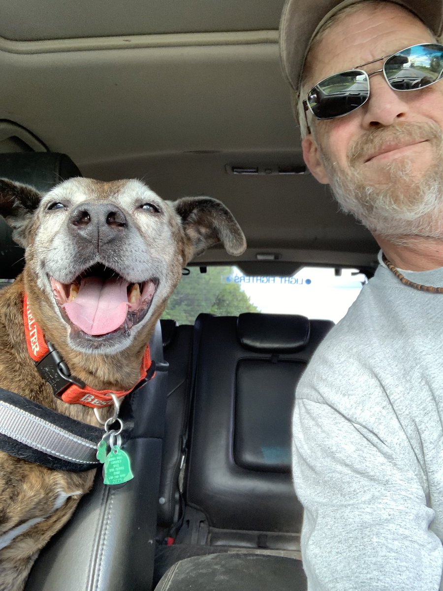 Diesel Trippin Saturday  Reminder:Diesel is a 15 year old I found at the shelter in April, look how happy he is!!! Please #AdoptDontShop or he knows we're on the way to get breakfast sandwich's!?!? #DogsofTwitter #GrayFaceMafia #seniorpupsaturday<br>http://pic.twitter.com/wB40fIIcww