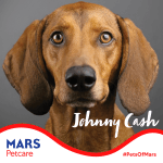 Image for the Tweet beginning: #PetsOfMars: I'm Johnny Cash. I