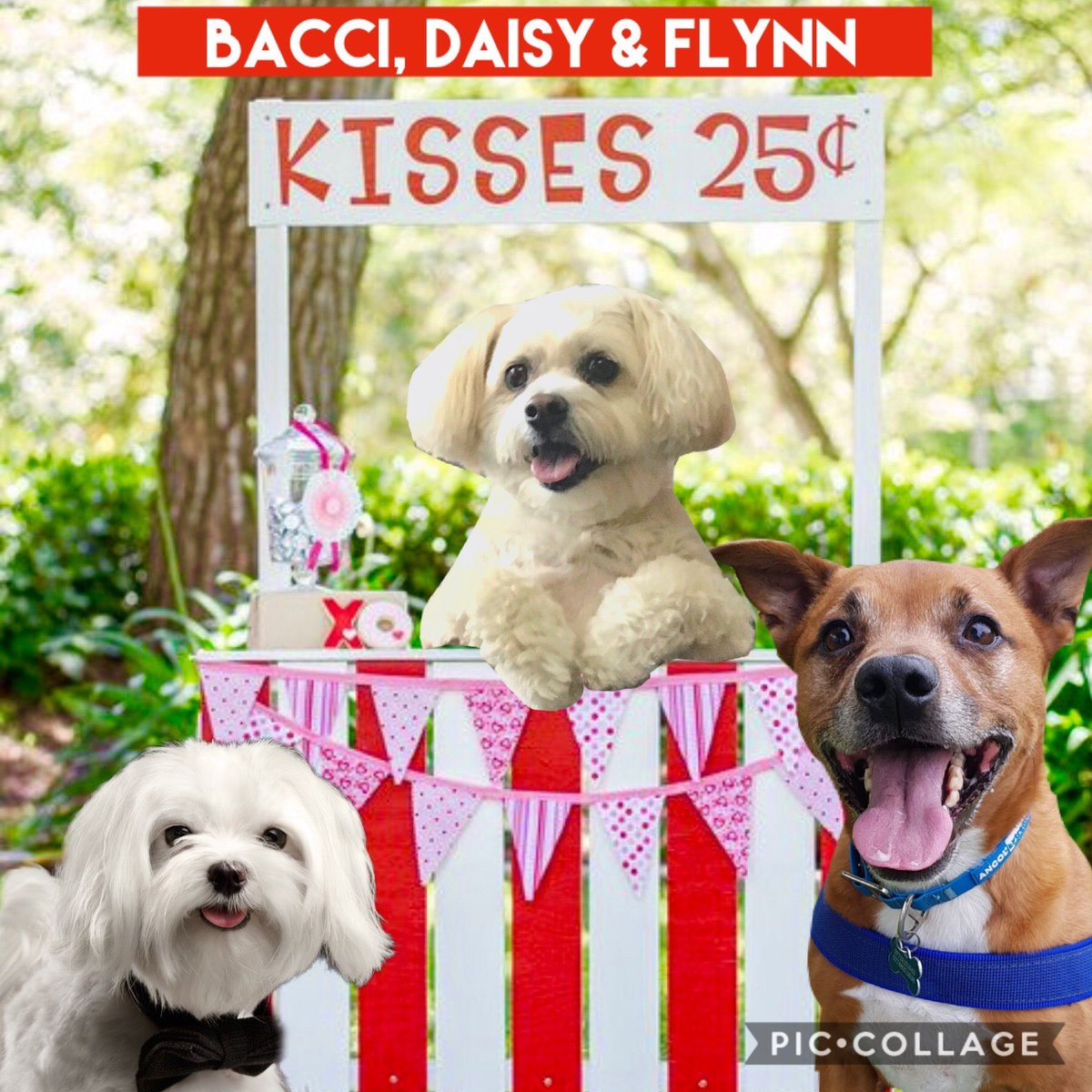 It's my party....so I figured that I would run the kissing booth!!  I'm a big flirt!!  #daisysparty #dogsoftwitter <br>http://pic.twitter.com/rGJHUI5907