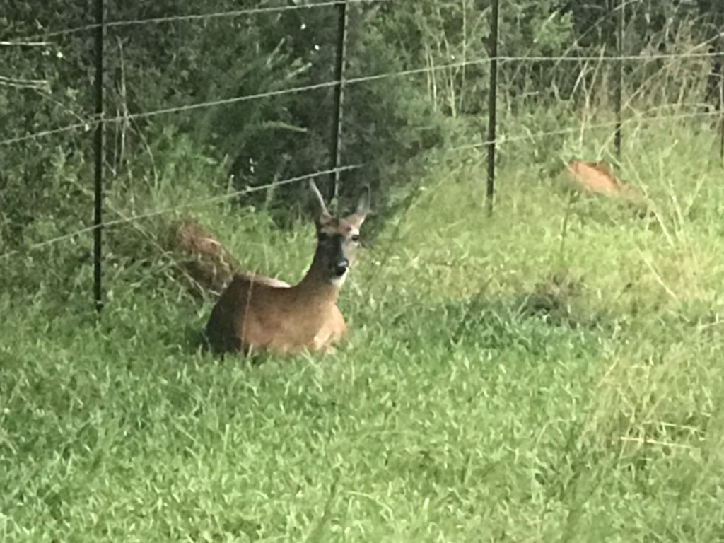 Just chillin' by the driveway #ohdeer #wildlife #FarmLife #Georgia #makehealthyyourhabit <br>http://pic.twitter.com/vsPh0w9RKQ