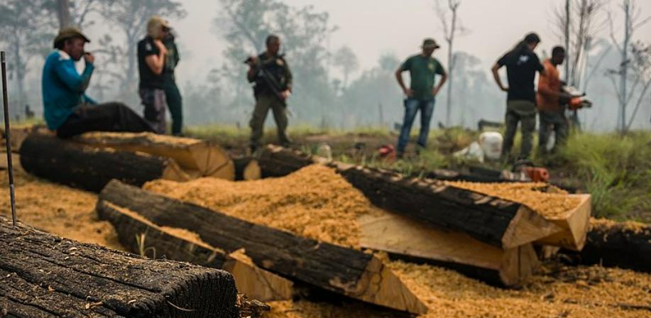 Very bad news. #Brazil guts environmental agencies, clears way for unchecked deforestation. President Jair Bolsonaro appears intent on decriminalizing Amazon #deforestation, ending most fines, and gutting environmental agencies with mass firings.  READ:  http:// news.mongabay.com/2019/06/brazil -guts-environmental-agencies-clears-way-for-unchecked-deforestation/   … <br>http://pic.twitter.com/aqNlTlF0CZ