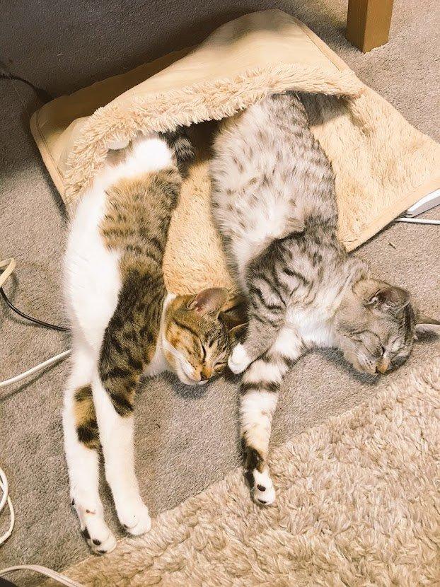 ココニャ@猫写真集、好評発売中!さんの投稿画像