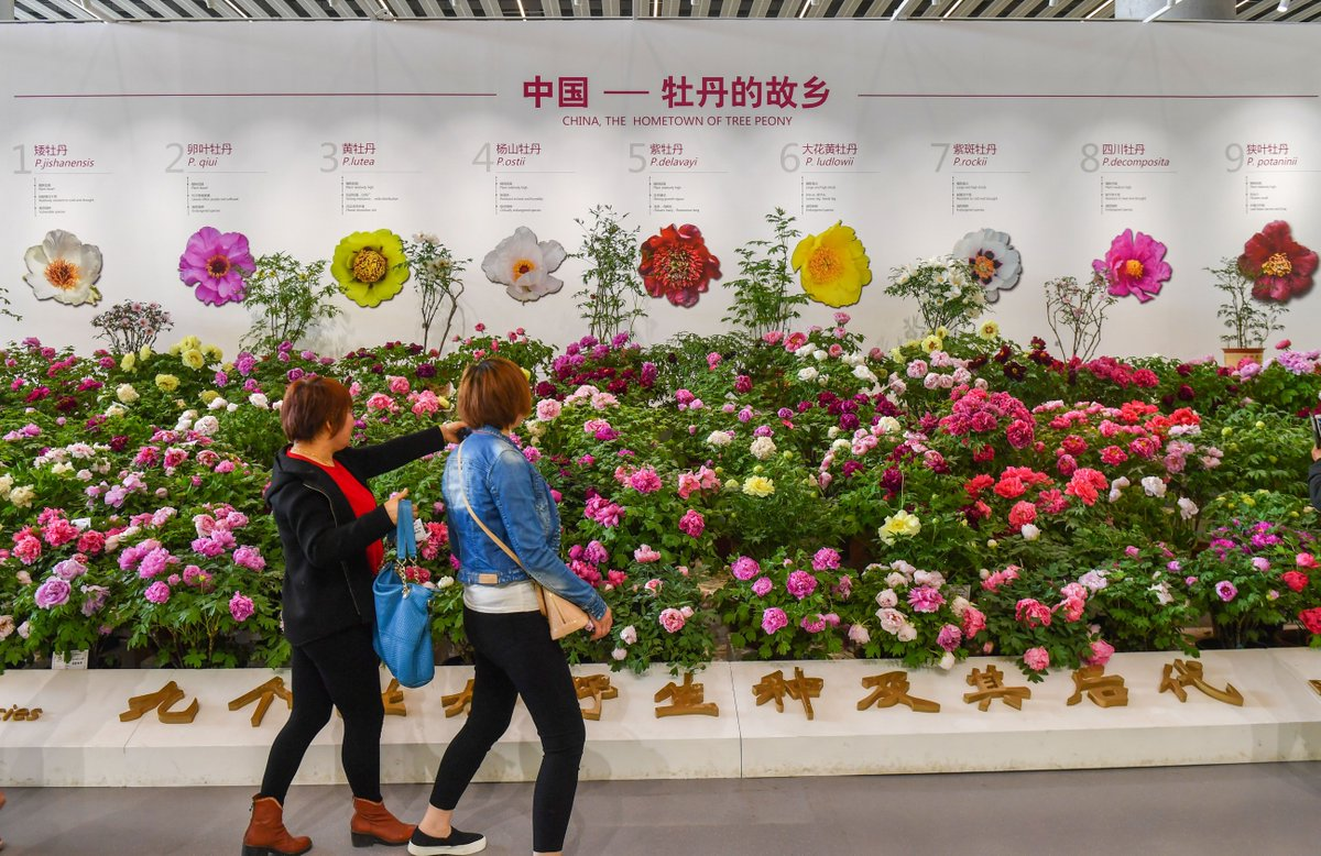 China is one of the few countries in the world to have mastered plant factory technology, which is currently on display at the #BeijingExpo2019. #HorticulturalExpo http://bit.ly/2L8cjtn