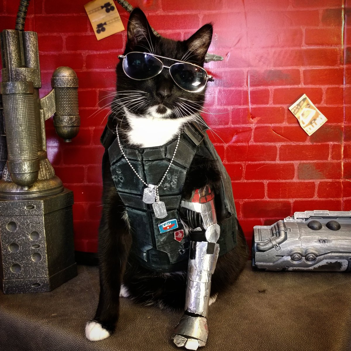 "Cat Cosplay on Twitter: """"Wake the fark up, Samurai. We've got a ..."