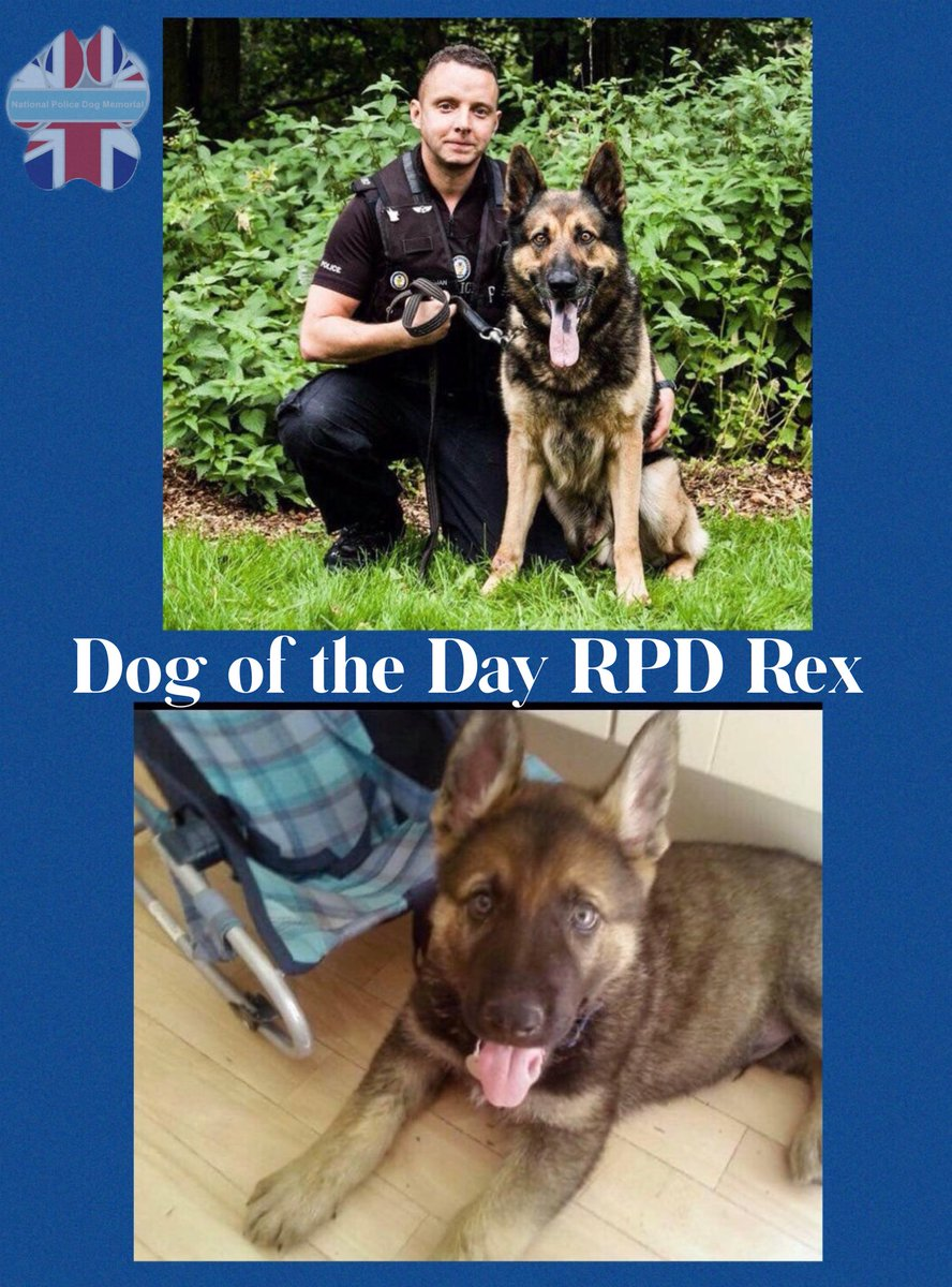 Our Dog Of The Day today is RPD Rex.   Sadly Rex has crossed the rainbow bridge.  Our thoughts are with his family at this sad time    Rex served with West Midlands Police.  Thank you for your service    #WeWillRememberYou   @WMPDogs<br>http://pic.twitter.com/jh9m8I3Hzz