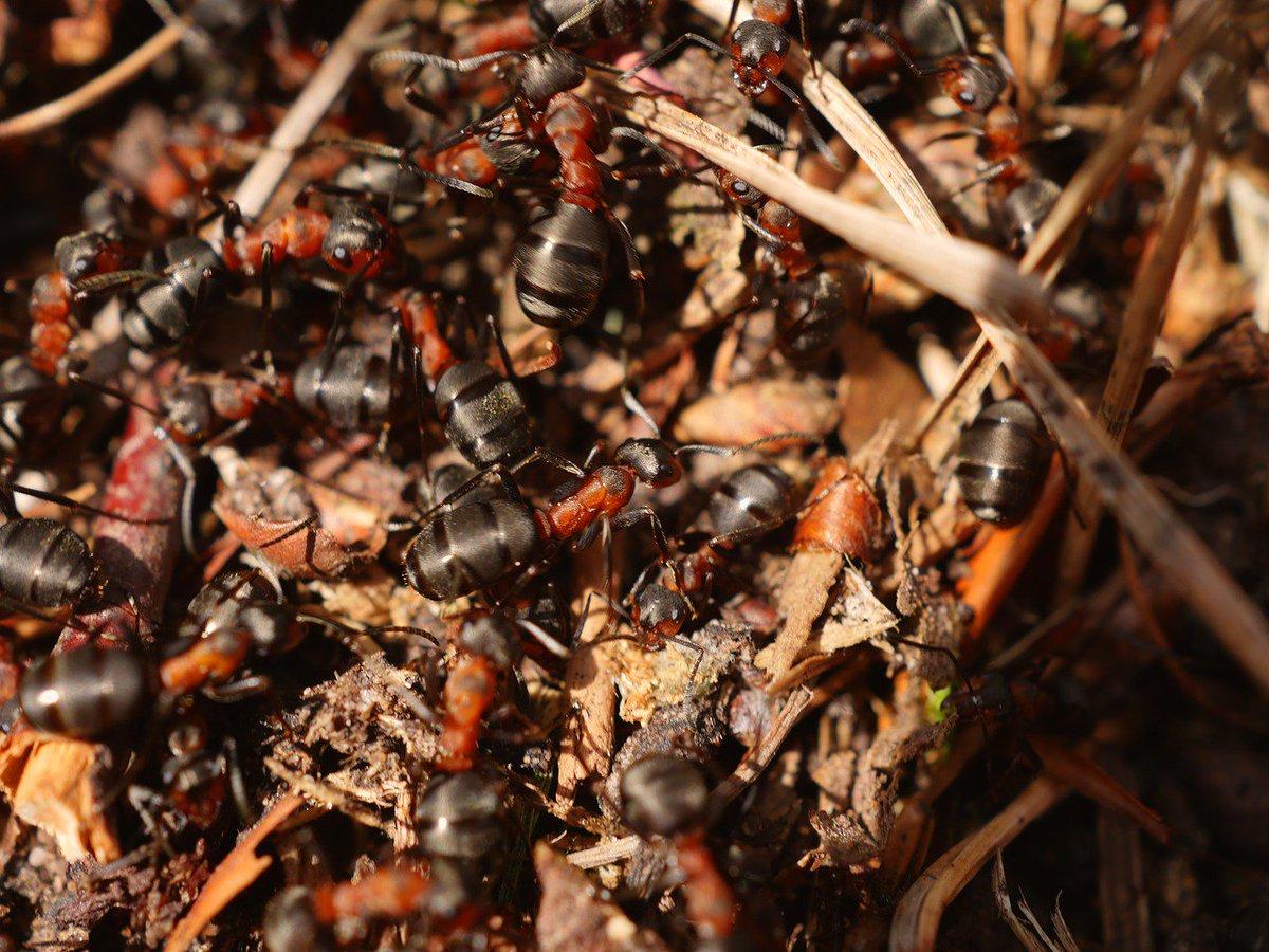 данной странице много муравьев фото много