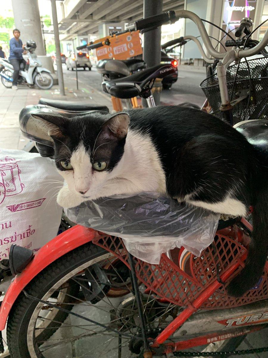 test ツイッターメディア - エンポリアム前猫屋敷  今日はパオちゃんがかつてのウアン君の如く自転車の上で待ってました。  ニャーって鳴いてエンポリアムのすぐ近くまで付いてきました。 https://t.co/pgSdMsqcwG