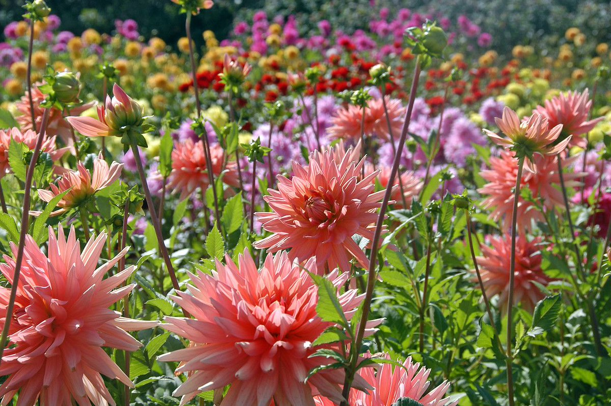 This, is how you start a great week! #MondayMood  #ILoveDahlia<br>http://pic.twitter.com/YlX2TdIeOt