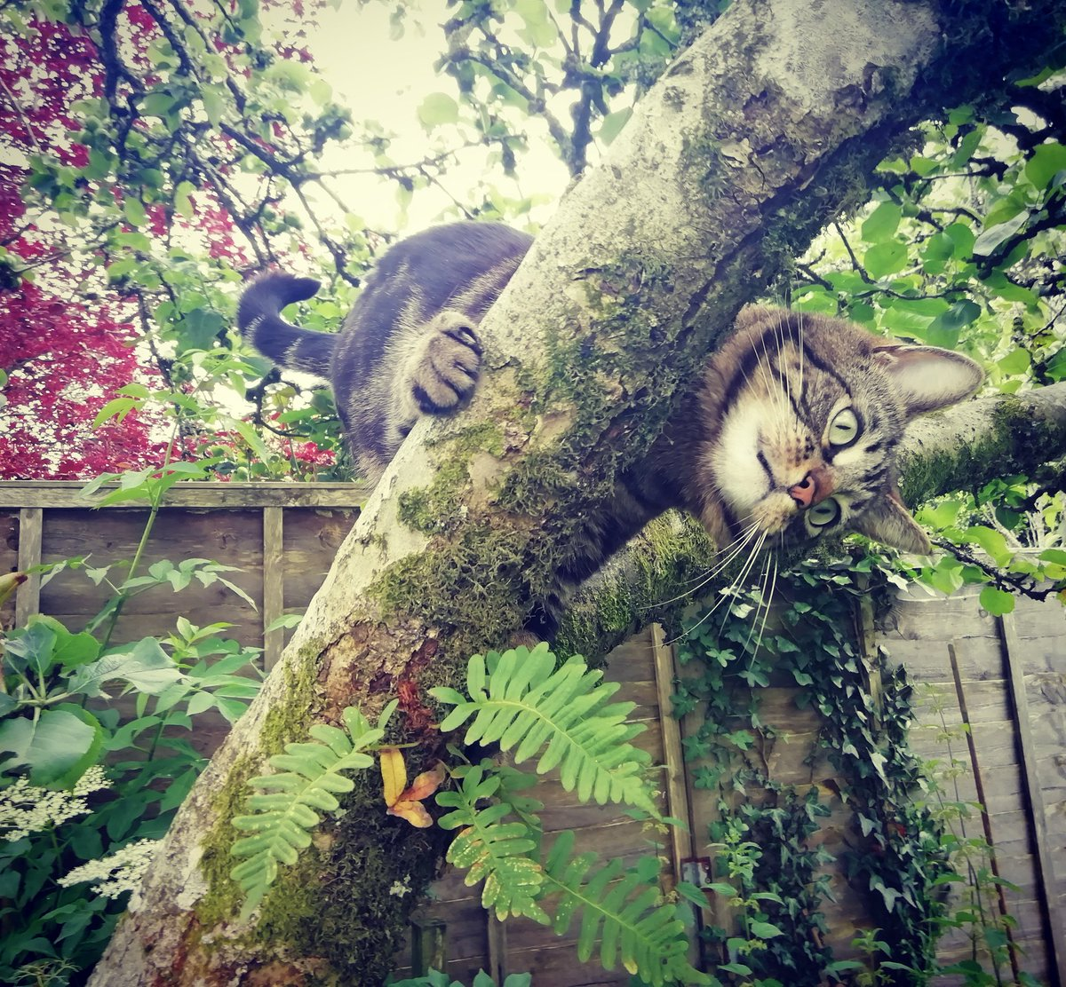 You don't need permission to be happy... Nap in the sun, eat the nip, climb the tree... Happiness is what you make it   #MondayMotivation #CatsOfTwitter #cats #CuteCats #MondayMorning #mondaythoughts #MondayMood <br>http://pic.twitter.com/k6c3a4y16y