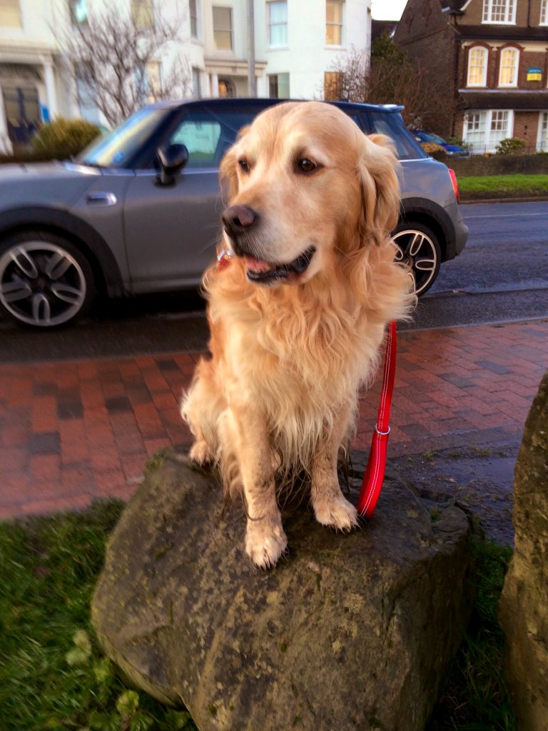 Sometimes, I just sit here...  .. and watch the world go by.   #MondayThoughts  #GoldenRetrievers <br>http://pic.twitter.com/GRRboPcCjr