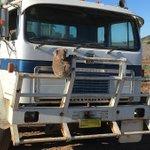 Glück für den kleinen Koala! 🐨 Kilometerlang fuhr der Wagen rückwärts, bis der Koala in Sicherheit war ❤️ Mehr  ▶️▶️ https://t.co/HH8wMKeO8z
