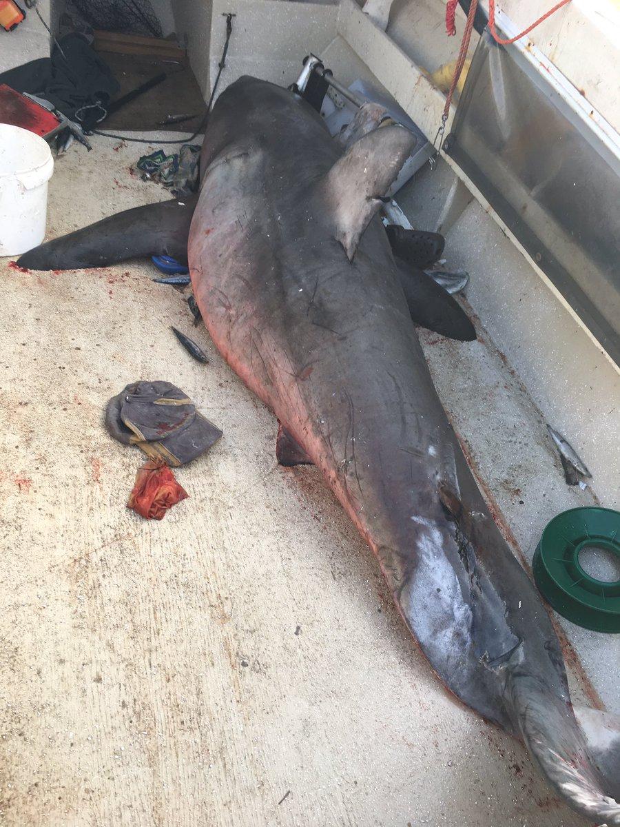 повреждение лодки акула
