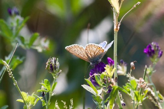 Give butterflies a helping hand in your #garden or community with these tips from @KentWildlife:  http:// bit.ly/2rm8DIi  &nbsp;   #wildlife<br>http://pic.twitter.com/8qkTSLpInJ
