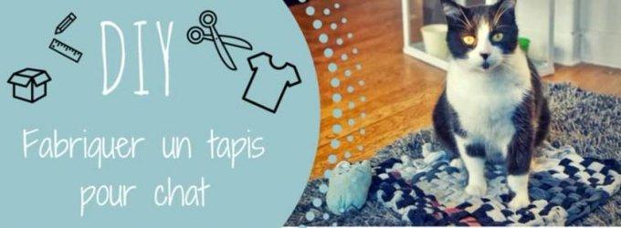 Fabriquer un tapis pour chat : le tuto DIY !