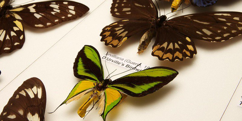 #Today, see behind the scenes of our entomology collection &amp; learn how we preserve insects. Book on:  http:// bit.ly/2r8hKhT  &nbsp;   #free #workshop<br>http://pic.twitter.com/8dXxIRmzKN
