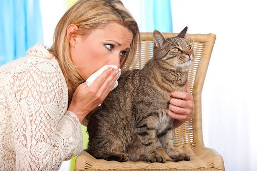 If you're unlucky enough to have a pet allergy, you can try reduce your symptoms with these tips: https://t.co/x7RRQoAcgW