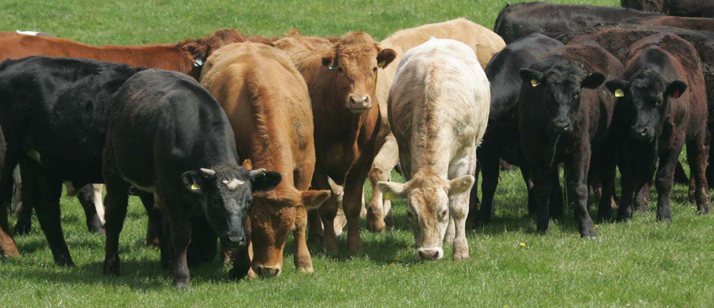 Calves grazing 'high risk' pasture require strategic worming, so discuss options with a your vet or SQP #GrasslandManagement <br>http://pic.twitter.com/Ng4YFIoD6o