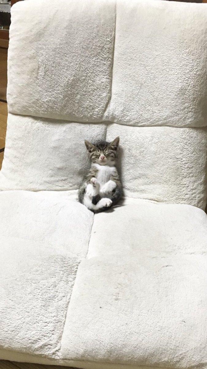 反則級の可愛さw座椅子でテレビ見ながら眠っちゃった猫www
