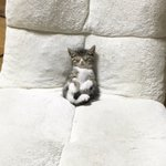 座椅子でテレビを見てたら眠くなったみたいで、、、、めちゃくちゃ可愛い、、、、!!! pic.twit…