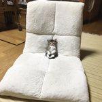 反則級の可愛さw座椅子でテレビ見ながら眠っちゃった猫!