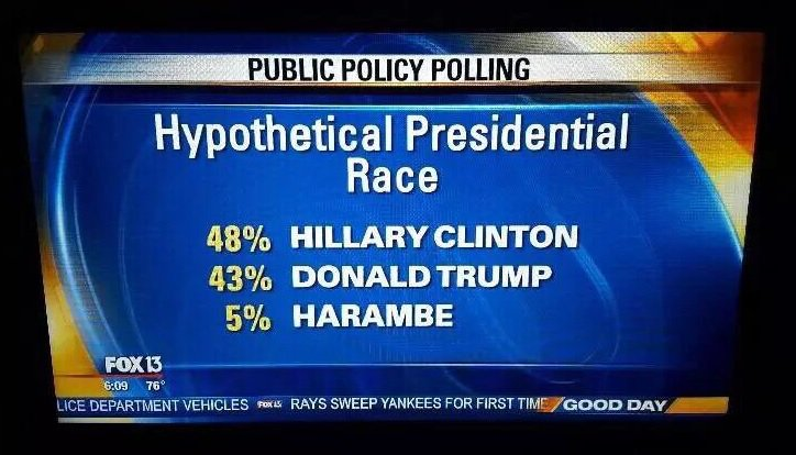 Harambe the gorilla polled 5% in a presidential election poll in July, 2016 and ahead of Greens candidate Jill Stein who received 2%.
